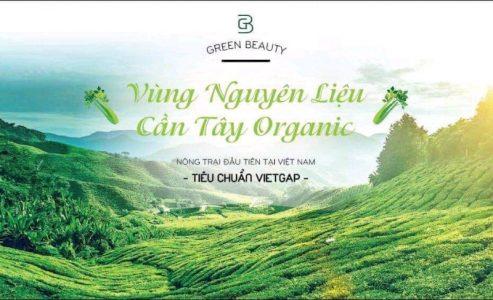 Vùng nguyên liệu cần tây organic đạt tiêu chuẩn VIETGAP