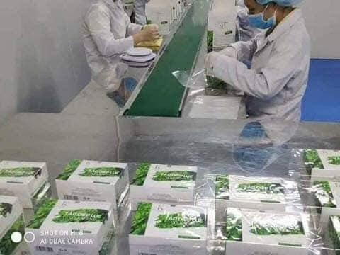 tảo diệp lục collagen được sản xuất trên dây chuyền hiện đại tiên tiến.